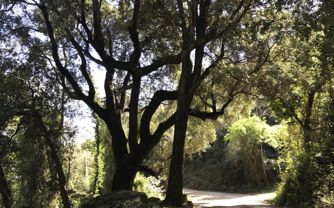 Ruta d'aquí: L'ànima del Montnegre